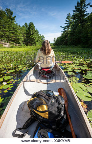 Woman in the bow of a canoe among water lilies and pickerel weed on the Murdock River near Killarney, Ontario, Canada - Stock Photo