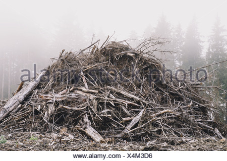 Pile of wood debris from clear cut logging Mist in the forest Calallam County Washington USA USA - Stock Photo