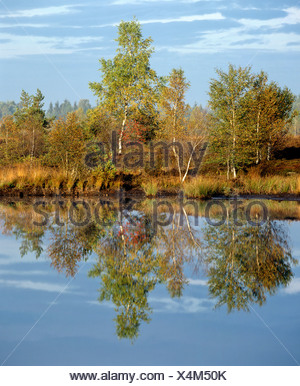 Bog lake, birches in autumn, water reflections - Stock Photo