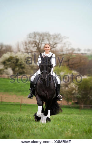 Friesian or Frisian horse, stallion, trotting with a female rider on horseback, on a meadow, classical dressage - Stock Photo