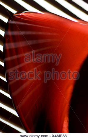 stripes in red grafic - Stock Photo