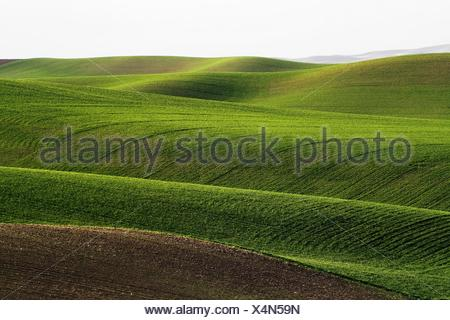 Palouse rolling hills in Washington State USA - Stock Photo