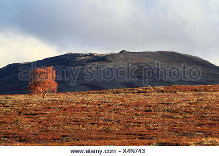 Dovre Nationalpark Norway - Stock Photo