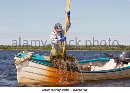 oyster Fisherman, West Prince, Prince Edward Island, Canada - Stock Photo
