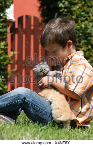 domestic cat, house cat, Persian (Felis silvestris f. catus), boy sitting on a lawn with two 4 weeks old kittens on the lap - Stock Photo