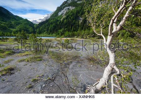 Primeval forest, forest, Derborence, Switzerland, Europe, canton, Valais, mountain lake, lake, tree, birch - Stock Photo