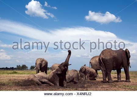 African elephants (Loxodonta africana) wallowing in waterhole. Masai Mara National Reserve Kenya. Taken remote wide angle camera. - Stock Photo
