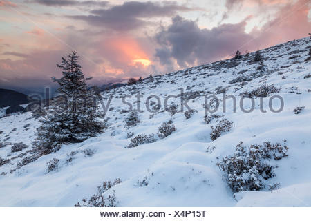 Colle of San Zeno, Trompia valley, Lake Iseo, Brescia province, Lombardy, Italy, Europe. A solitary fir with snow at sunset. - Stock Photo