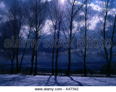 Evening sun on snow covered landscape - Stock Photo