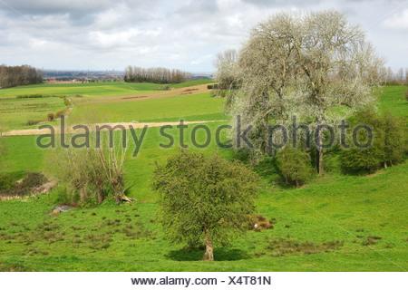 Bocagelandschap met hagen en bomen, Westvlaamse Heuvels, Scherpenberg, België Bocage landscape with hedges and trees, Scherpenberg, Belgium - Stock Photo