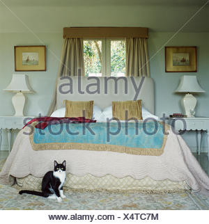 Black+white cat sitting in bedroom with beige quilt and blue throw on upholstered bed in front of window - Stock Photo