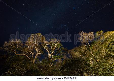Amazonas, Brazil. - Stock Photo