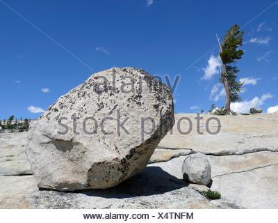 rock vs tree - Stock Photo