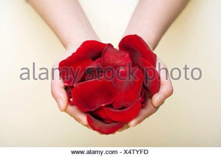A handful of rose petals - Stock Photo