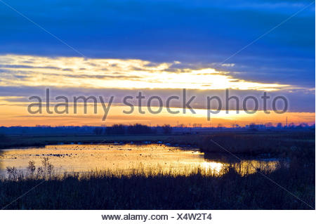evening light at the nature reserve Breites wasser, in the background power station Hafen and steel mill Arcelor Mittal, Germany, Lower Saxony, Osterholz - Stock Photo