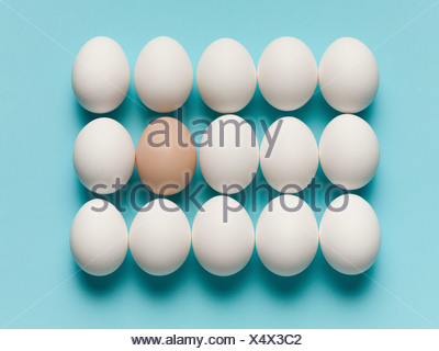 Brown egg with large white eggs - Stock Photo