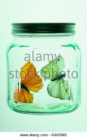 Two butterflies in glass jar - Stock Photo