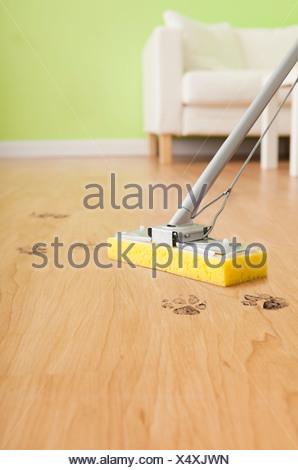USA, Illinois, Metamora, Mop cleaning dog footprint from wooden floor - Stock Photo