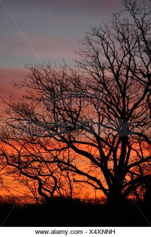 sunset counter-light blood-red shine shines bright lucent light serene luminous - Stock Photo