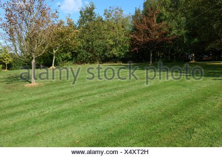 Rough lawn with fine mulch after mowing with a rotary mulching mower in autumn - Stock Photo