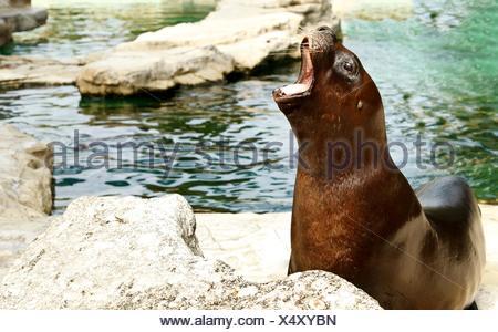 animal mammal aquarium - Stock Photo