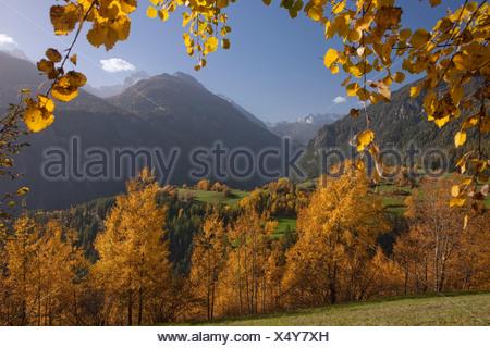 Albula valley, autumn, autumn, wood, forest, canton, GR, Graubünden, Grisons, tree, trees, Switzerland, Europe, Schmitten, scene - Stock Photo