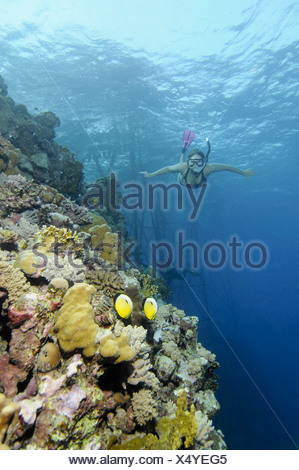 Egypt, Red Sea, Woman snorkeling next to coral reef