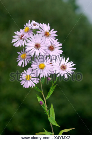 mnt aster