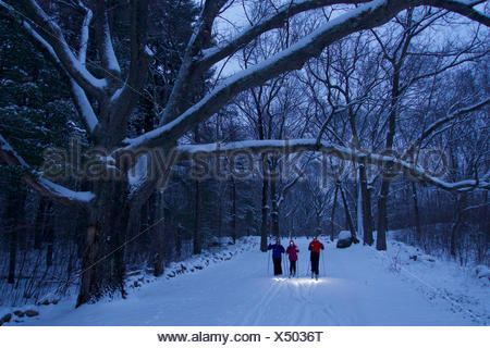 A woman and her teen daughter and son cross-country ski beneath fresh snow covered trees in twilight with headlamps on. - Stock Photo