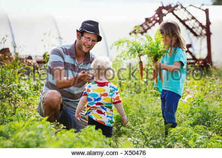 A man, a toddler, and a girl harvesting carrots in a vegetable patch. - Stock Photo