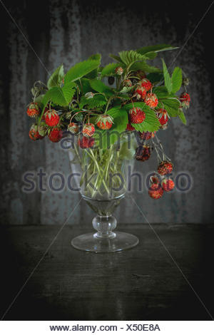 Bunch of ripe wild strawberries with leaves in vintage glass over old metal background. Rustic style. Natural day light. - Stock Photo