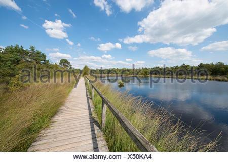 Boardwalk through the Pietzmoor moor, Lüneburg Heath Nature Reserve, Schneverdingen, Lower Saxony, Germany - Stock Photo