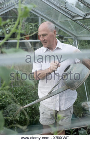 Senior man watering plants in his garden greenhouse - Stock Photo