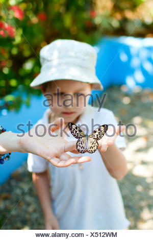 little boy holding a butterfly on his hand - Stock Photo