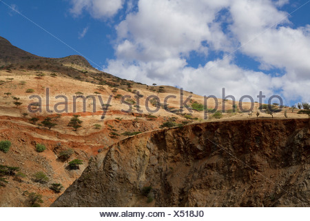 Semi-arid vegetation in the Huancabamba Depression, Cajamara, Peru - Stock Photo