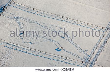 Aerial picture, Homberg paddock at the DGB Hattingen school, horses in snow, Ruhr area, North Rhine-Westphalia, Germany, Europe - Stock Photo