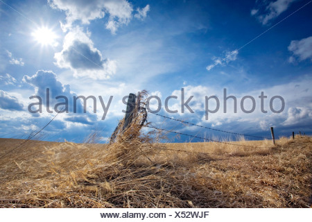 A barbed wire fence encloses a wheat field in Southern Alberta with sun and clouds overhead. - Stock Photo