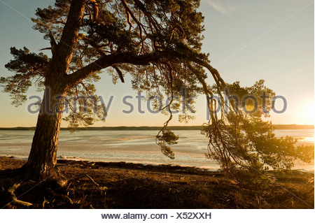 View of tree beside lake at dusk - Stock Photo