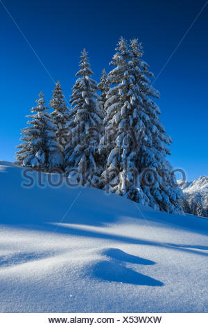 Tree, trees, spruce, spruces, Flumserberge, Flums mountain, mountains, Heidiland, sky, snow, Switzerland, Europe, Swiss mountains - Stock Photo