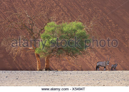 Sossusvlei, Namib Naukluft National Park, Namibia - Stock Photo
