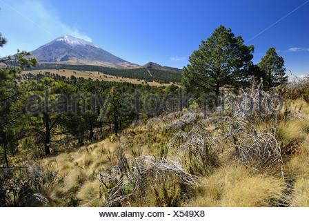 smoking Popocatepetl volcanoe, Paso de Cortes, Popocatepetl - Iztaccihuatl National Park, Mexico, Central America - Stock Photo