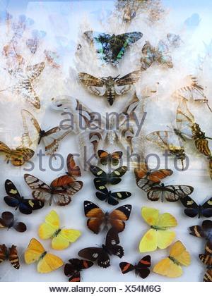 Artificial Butterflies Seen Through Glass - Stock Photo
