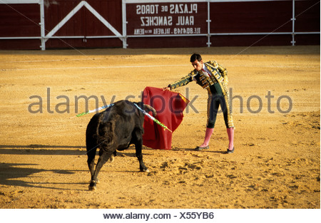 Bullfighter holding his red cape in front of a bloodied black bull during a bullfight at the Plaza de Toros von Calpe Bullring, - Stock Photo