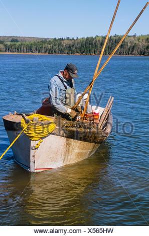 Oyster fishing, West River, Prince Edward Island, Canada, - Stock Photo
