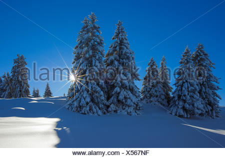 Tree, trees, spruce, spruces, Flumserberge, Flums mountain, mountains, back light, Heidiland, sky, snow, Switzerland, Europe, Swi - Stock Photo