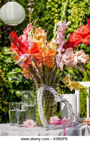Material Gladiolus Glass Vase Procedure Put Gladiolas In A Glass