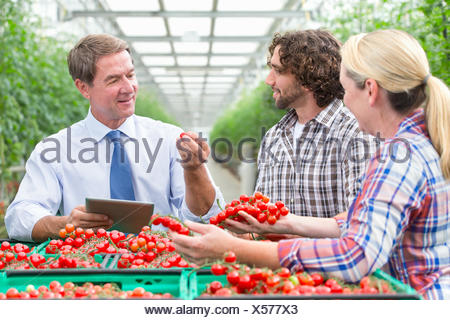 Businessman with digital tablet and growers inspecting ripe red vine tomatoes in greenhouse - Stock Photo