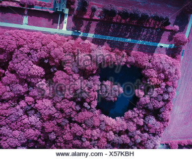 False colour infrared aerial photograph of small wood with a natural lake, red plants, blue water - Stock Photo