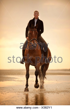 Woman riding on a Hanoverian gelding, wearing an English bridle, at a gallop, in the evening light, on the beach of Borkum - Stock Photo