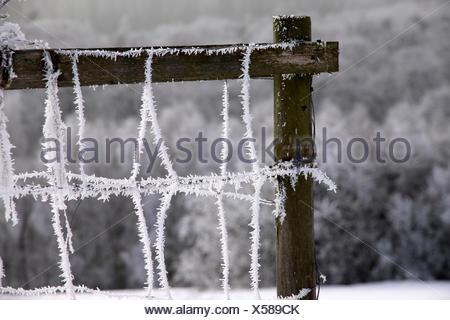 Zaun mit Raureif bei Engenhahn im Taunus, Hessen, Deutschland - Stock Photo